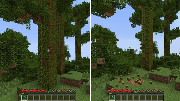 jungletree